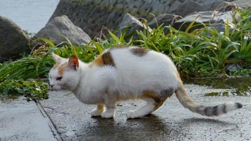 雨に濡れた道に立つ猫