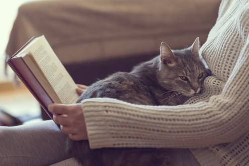 読書をする飼い主の膝の上で休む猫