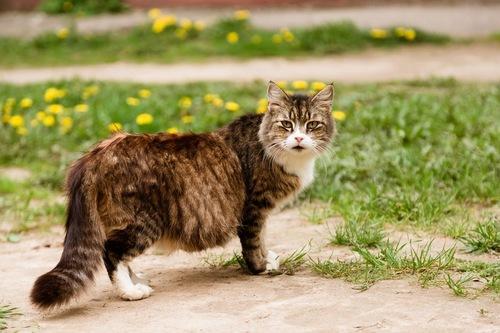 妊娠した猫