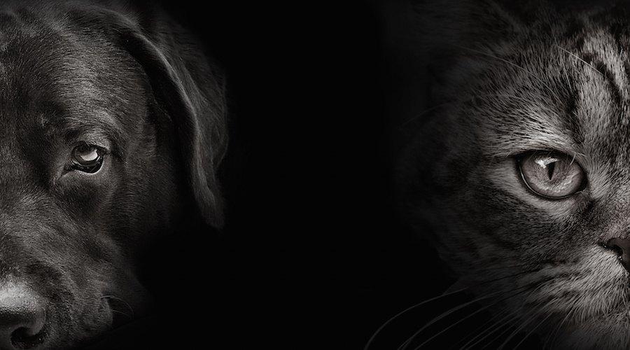 モノクロの犬と猫の顔