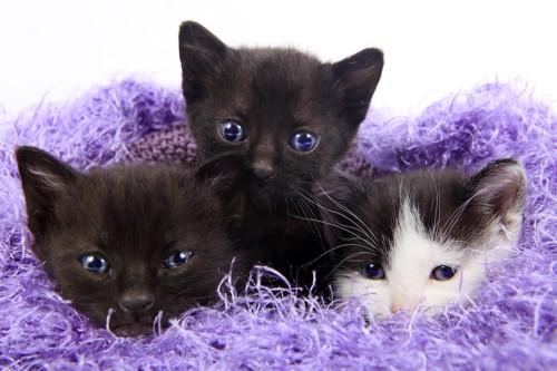 綺麗な瞳の三匹の子猫