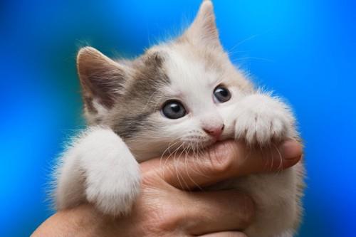 指を噛む子猫