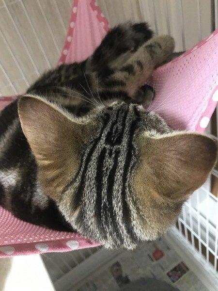 縞模様が綺麗な猫の後頭部