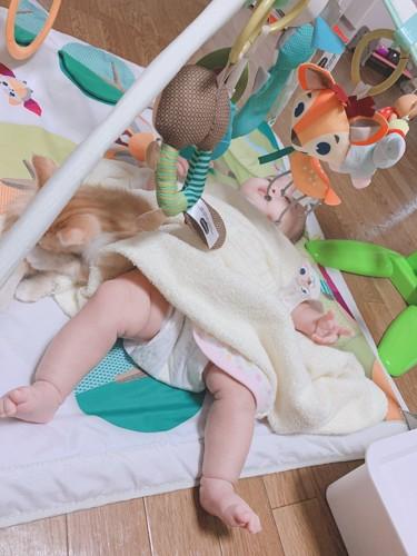 ベビージムで遊ぶ赤ちゃんと子猫