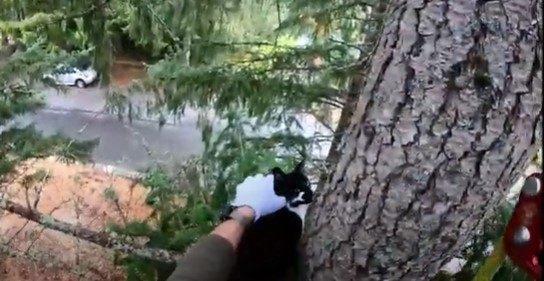 2匹目の猫を確保