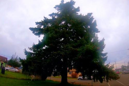 レニーが立ち往生した木