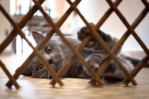 柵の向こう側で横たわる猫