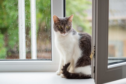 雨の窓辺にいる猫