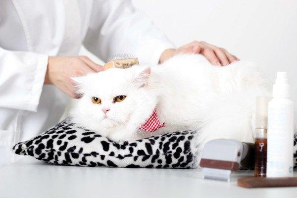 60440769 お手入れ中の猫の写真