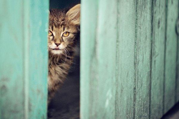 開いた扉から覗く猫
