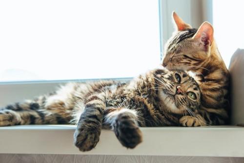 仲良く寄り添う2匹の猫