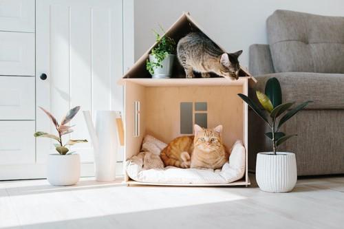 家の形をした猫用ベッドで寛ぐ2匹の猫