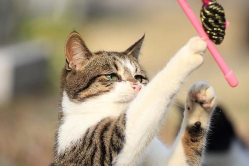 棒おもちゃで遊ぶ猫