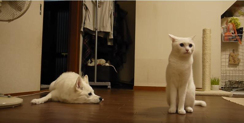 落ち込む犬と勝ち誇った顔の猫