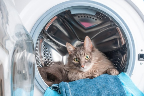 洗濯機の乾いたデニムにのる猫