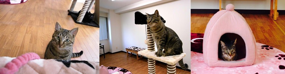 猫カフェ WILL店内の様子