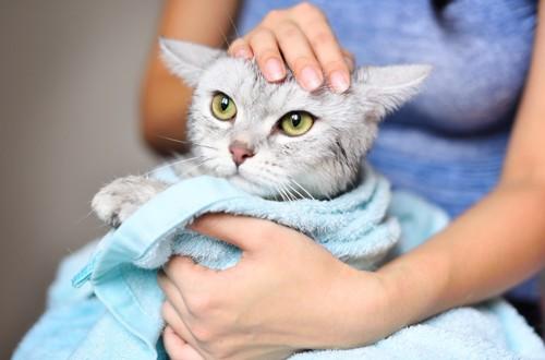 バスタオルに巻かれた猫