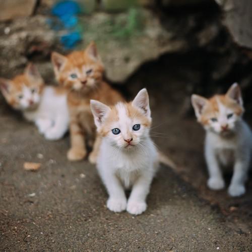 野良の子猫たち