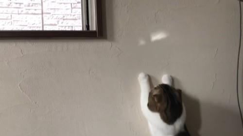 壁に両前足をついてる猫