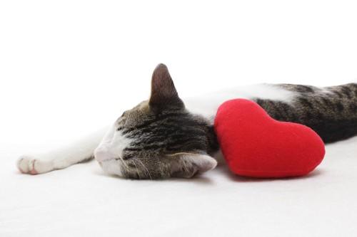 ハートのクッションと横たわる猫