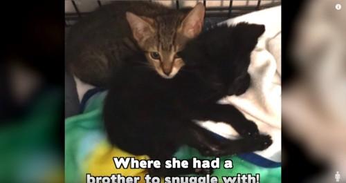 一緒に寝る2匹の子猫