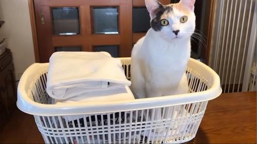 洗濯カゴに入る