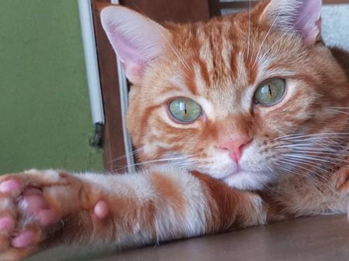 片手を伸ばしてリラックスしている猫