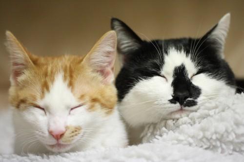 眠る2匹の猫