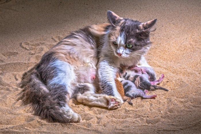 生まれたての子猫