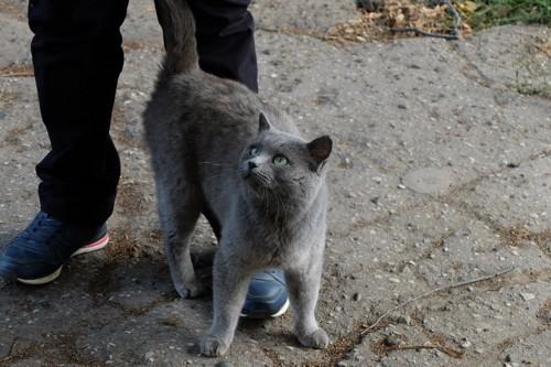 足の間に入る猫