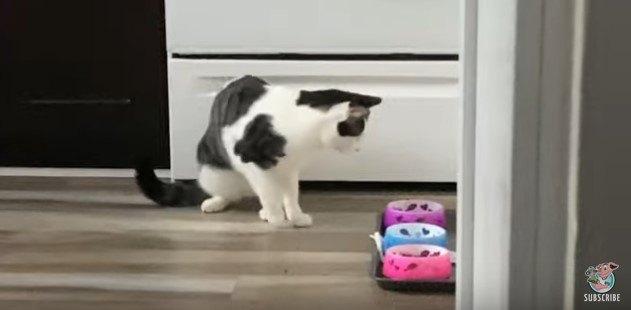 皿を見つめる猫
