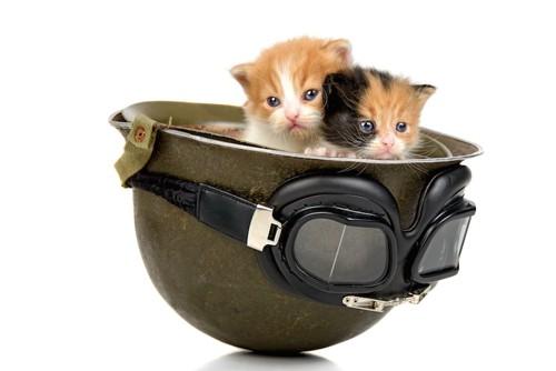 バイクのヘルメットの中にいる二匹の子猫