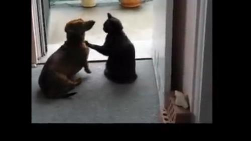 肩をポンとする猫
