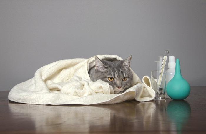 体温計などの医療具とタオルにくるまる猫