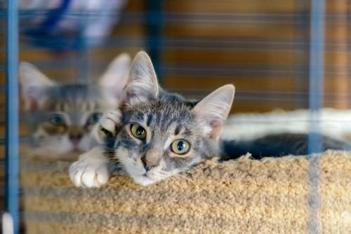 猫用ベッドの中から見つめる猫