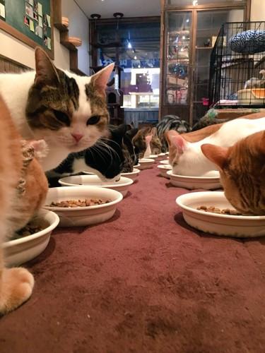 餌を食べる猫たちの画像