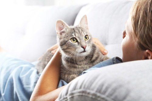 ソファーでくつろぐ飼い主のお腹の上に乗る猫