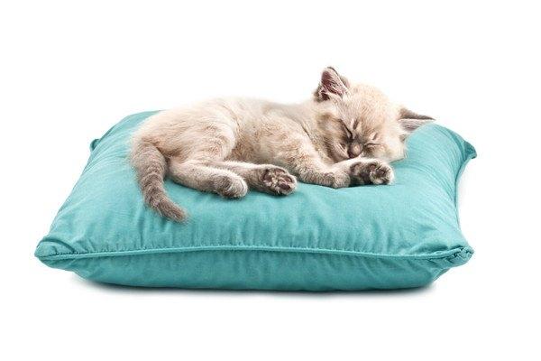 青いクッションで寝る猫