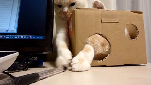 箱から後ろ足が出ている猫