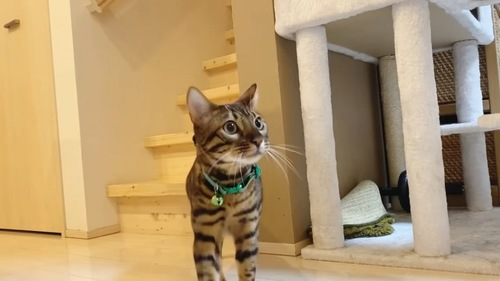緑色の首輪の猫