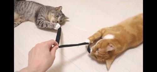 2匹一緒の紐で遊ぶ