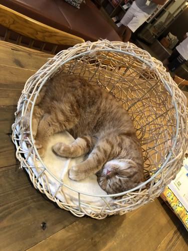 カゴの中で眠る猫