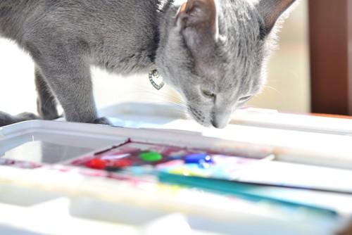 絵具を見つめる猫