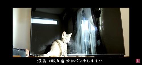 テレビの前で座る猫