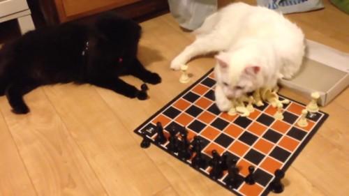 猫が駒を決まる