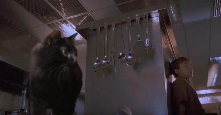 調理台の横を確認するアウル・キティ