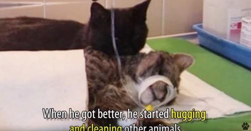 横たわる猫に寄り添う黒猫