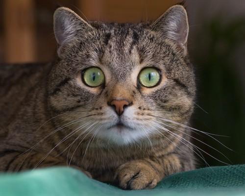 驚いた表情をする猫