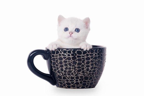 黒いカップと子猫