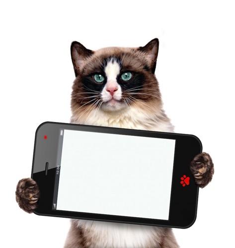 スマホを持って立つ猫